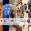 Animal Photobook